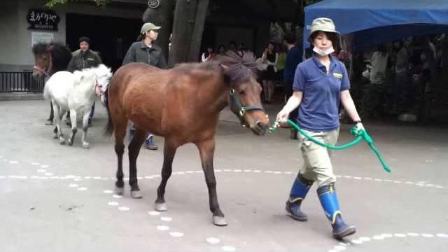 20130602_japanese_horse