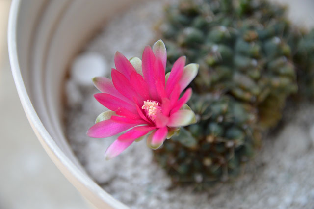 20150802_cactus