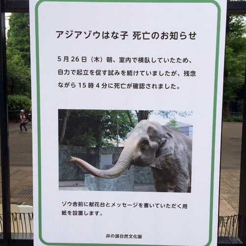 20160528_hanako_13