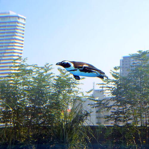「天空のペンギン」でビルを背景に飛ぶケープペンギン